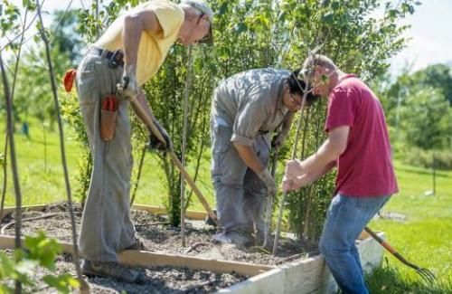 Scientists at The Morton Arboretum tend to a tree in a research plot.